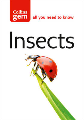 Picture of Insects