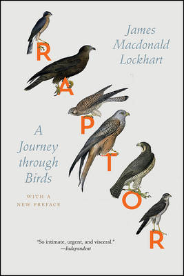Picture of Raptor: A Journey Through Birds