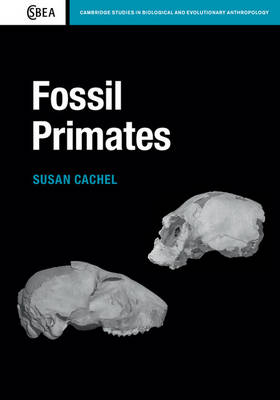 Picture of Fossil Primates