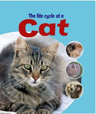 Picture of The Life Cycle of a Cat
