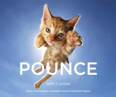 Picture of Pounce!