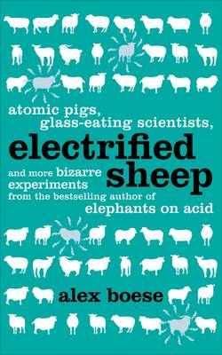 Picture of Electrified Sheep