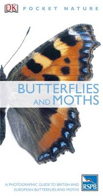 Picture of Butterflies and Moths