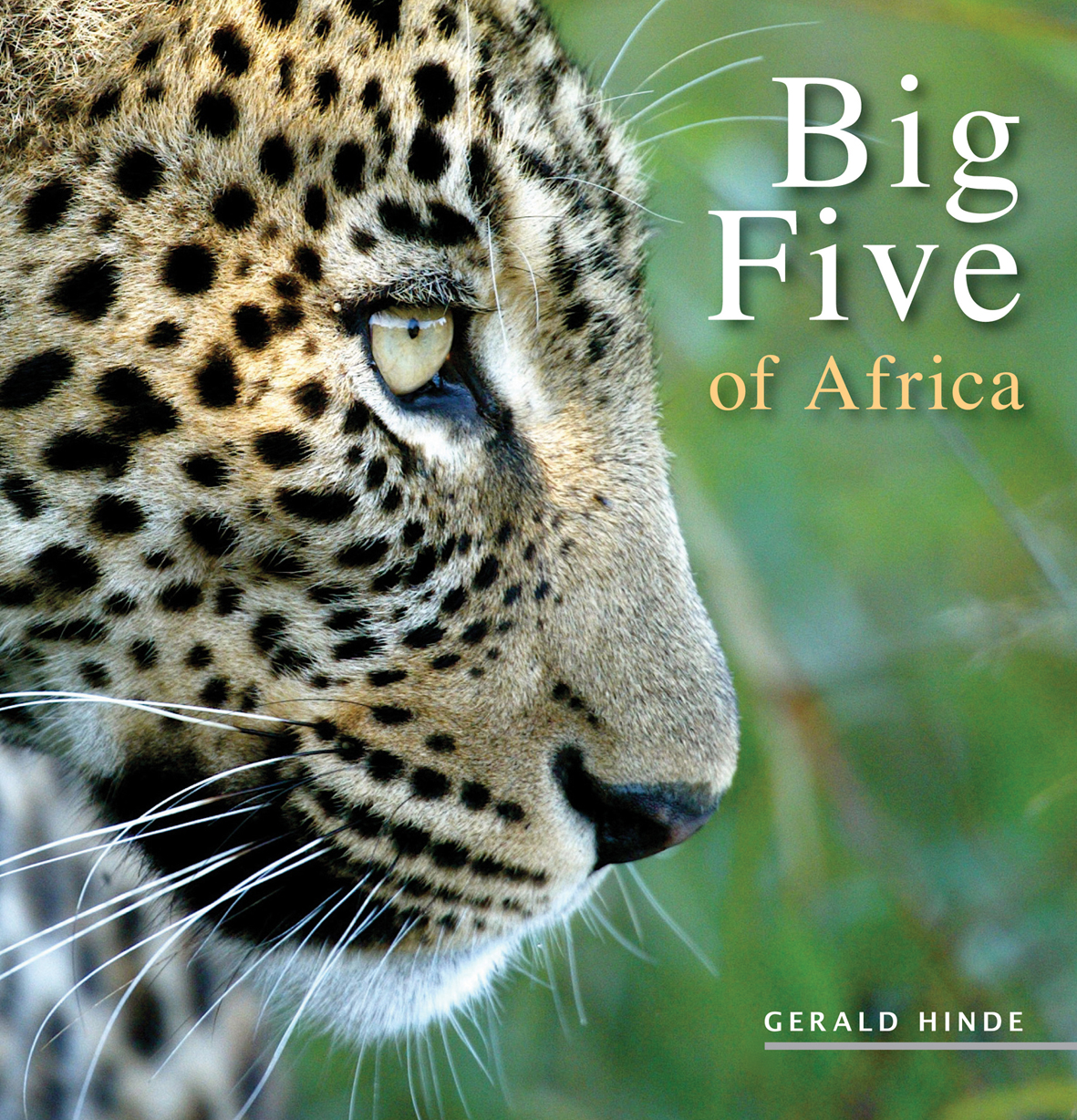 Picture of Big five of Africa