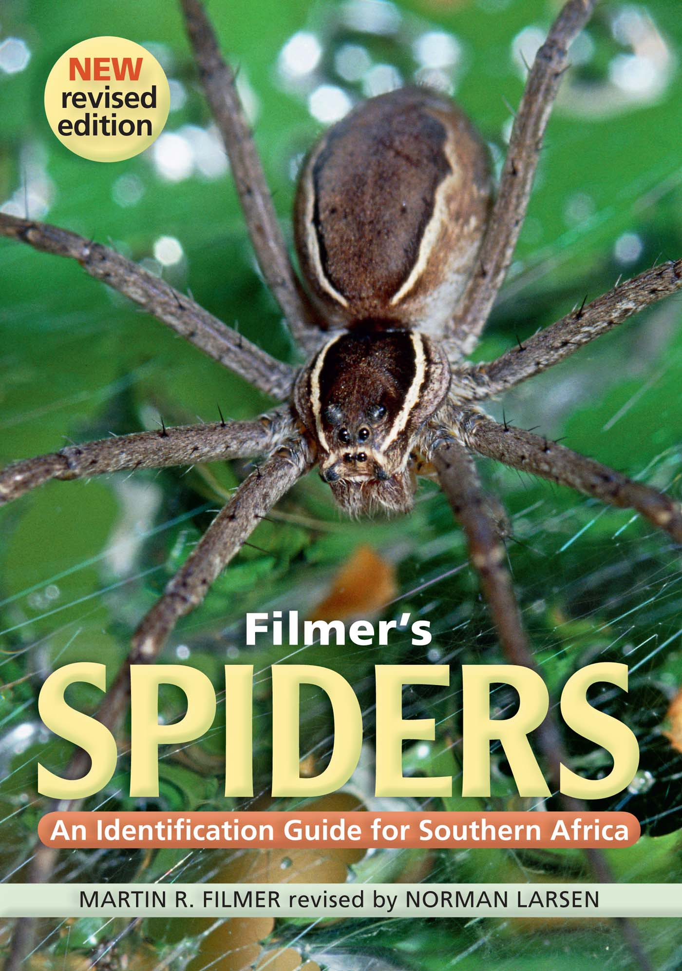 Picture of Filmer's spiders