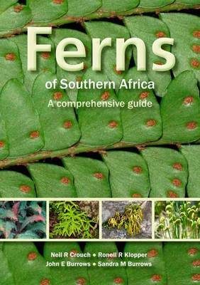 Picture of Ferns of Southern Africa