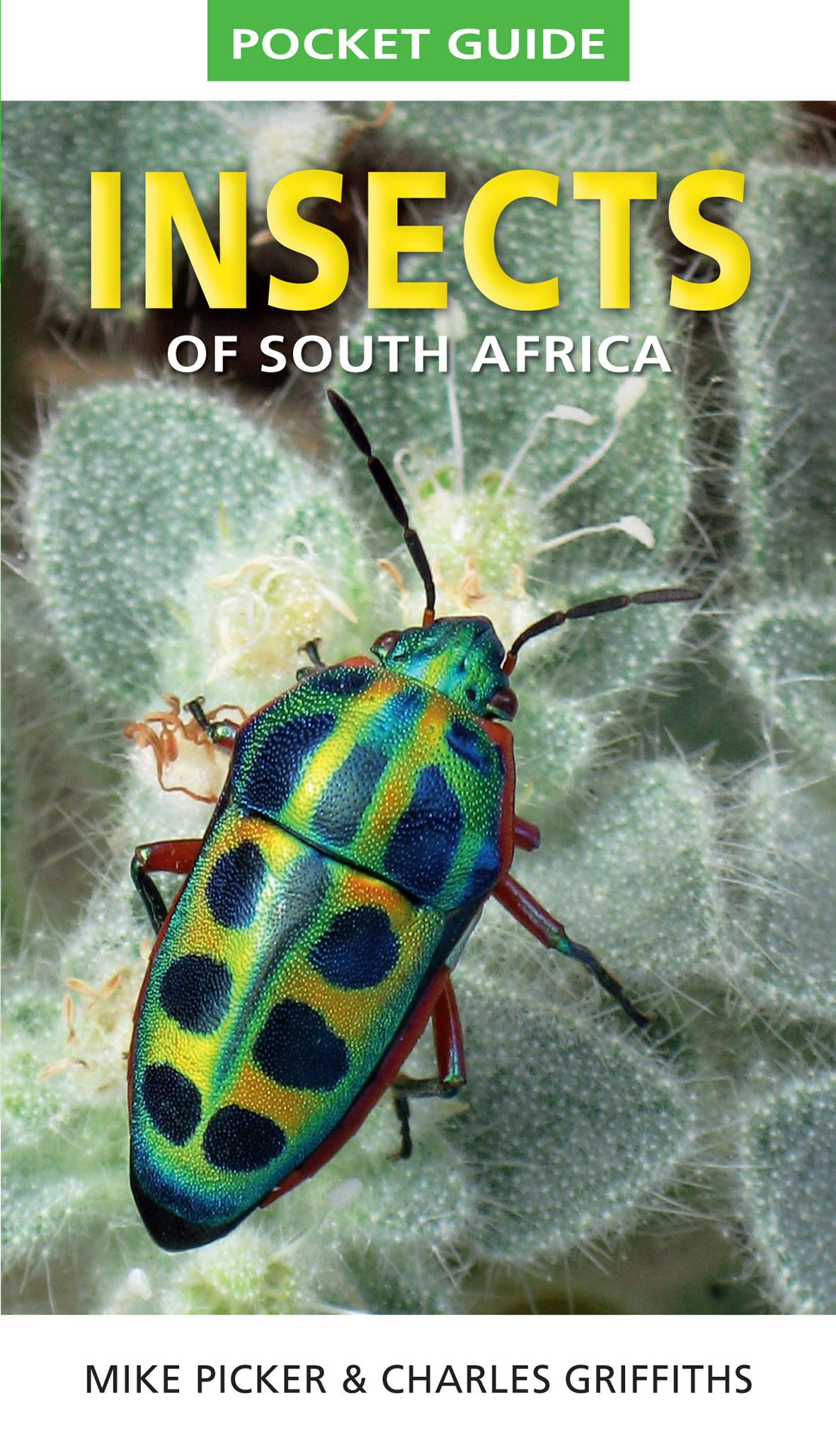 Picture of Insects of South Africa