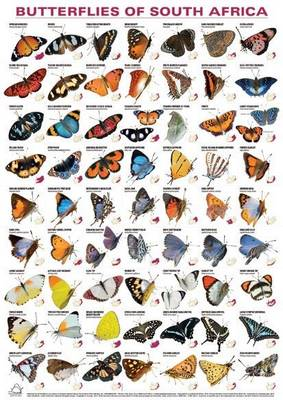 Picture of Butterflies of South Africa