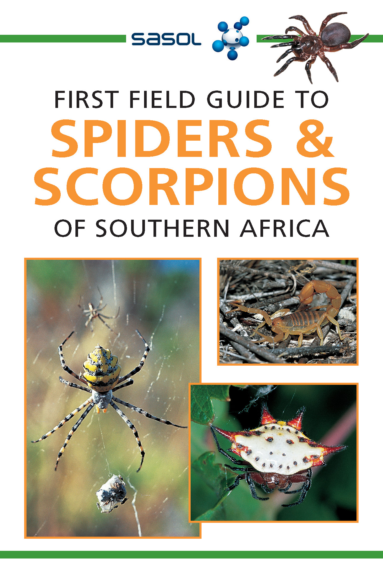 Picture of First field guide to spiders & scorpions of Southern Africa