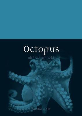 Picture of Octopus