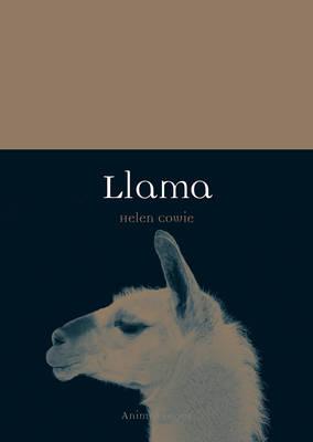 Picture of Llama