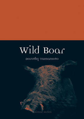 Picture of Wild Boar