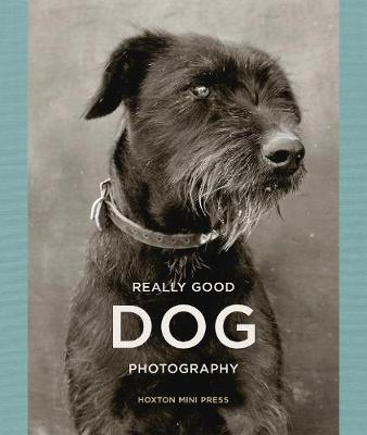 Picture of Really Good Dog Photography