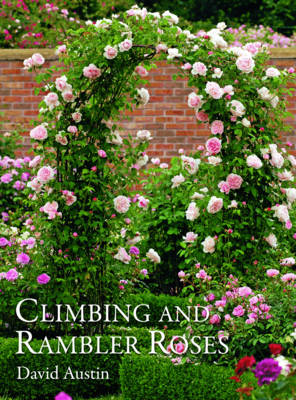 Picture of Climbing and Rambler Roses
