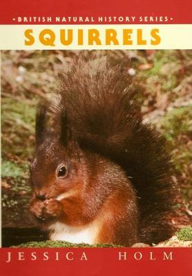Picture of Squirrels