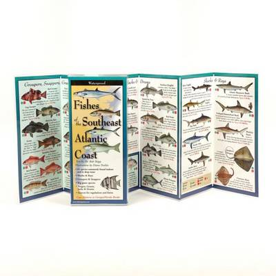 Picture of Fishes of the Southeast Atlantic Coast