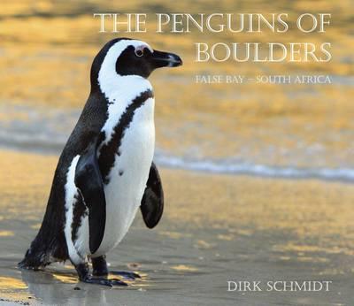 Penguins of boulders